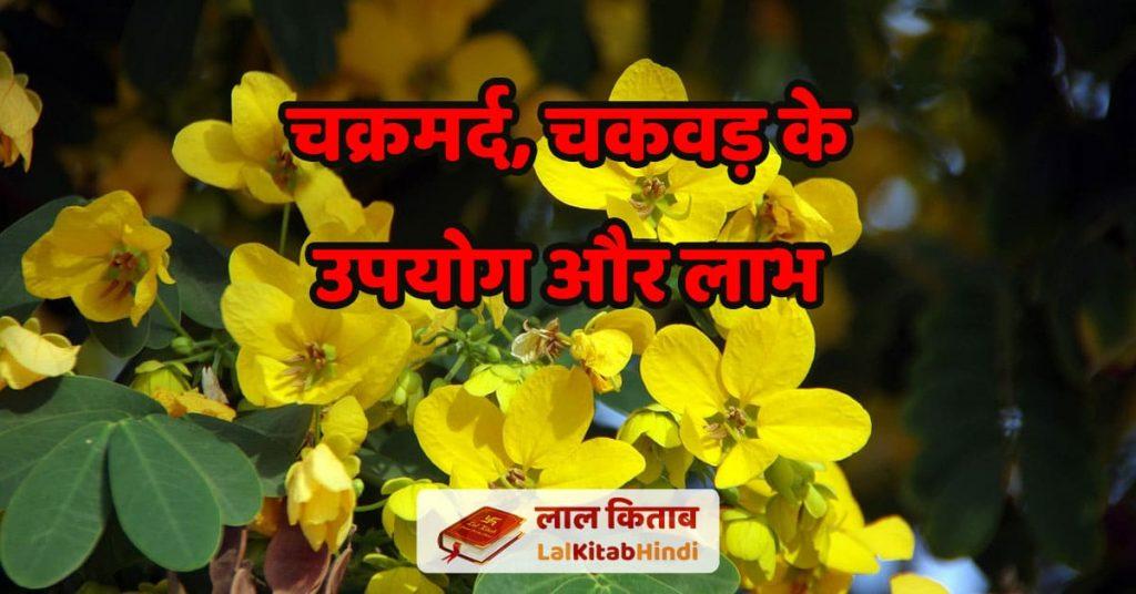Pawar ka ped dikhao - चक्रमर्द, चकवड़ के उपयोग और लाभ